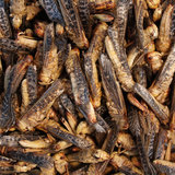 Freeze-dried grasshoppers 40 grams_
